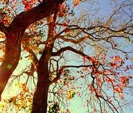 fall,lovely,sky,sunlight,tree-f2c23621719a2e2ac631498a3c65ea9c_m